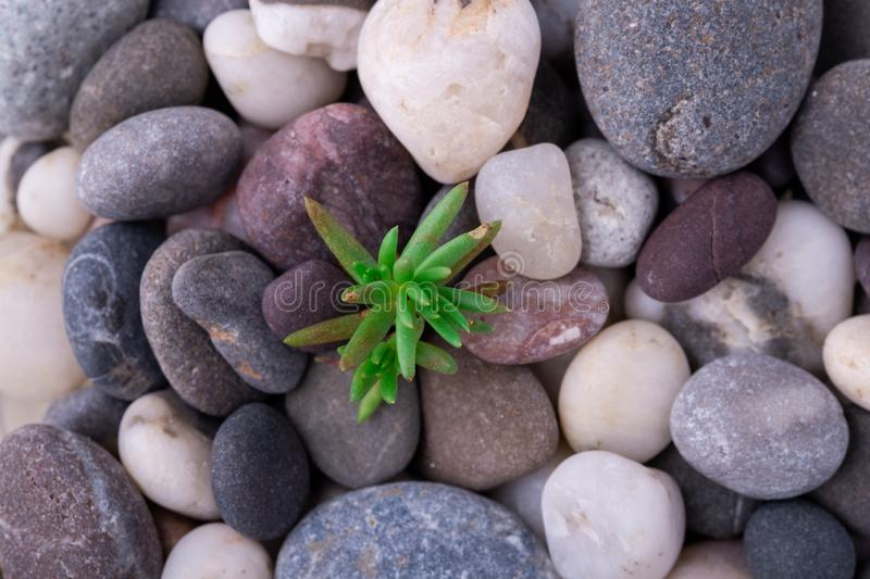 Varied pebbles with little green succulent top view stock image