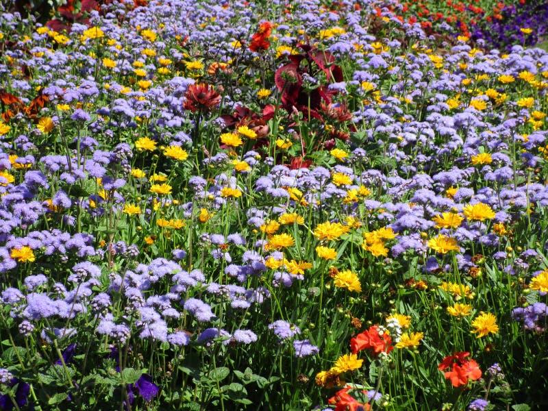 Variedad bastante linda de flores del jardín del verano en Stanley Park Perennial Garden, 2018 imagen de archivo libre de regalías