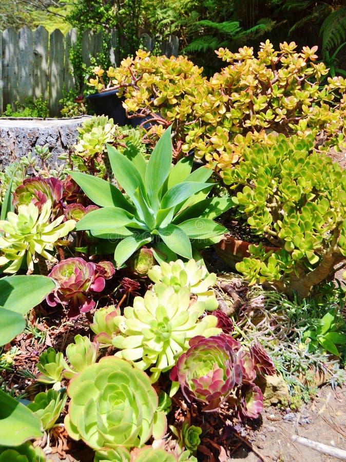 Variedades de cactus y suculentas categora cactus y for Variedades de cactus