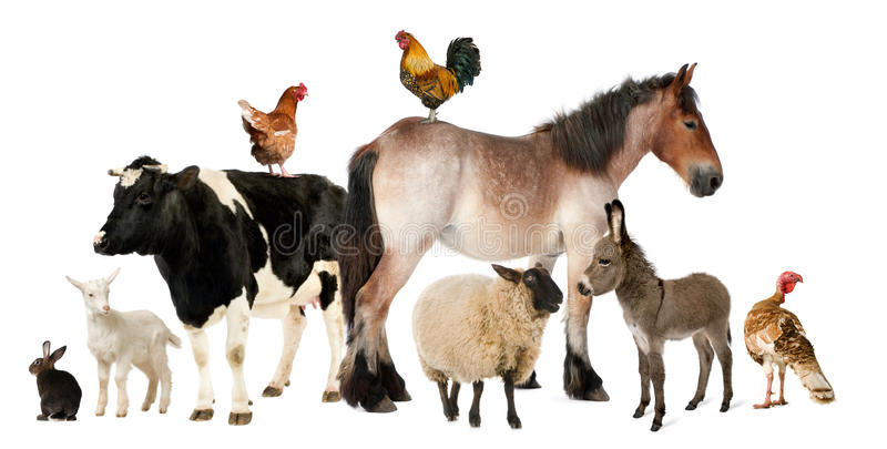 Variedad de animales del campo fotografía de archivo