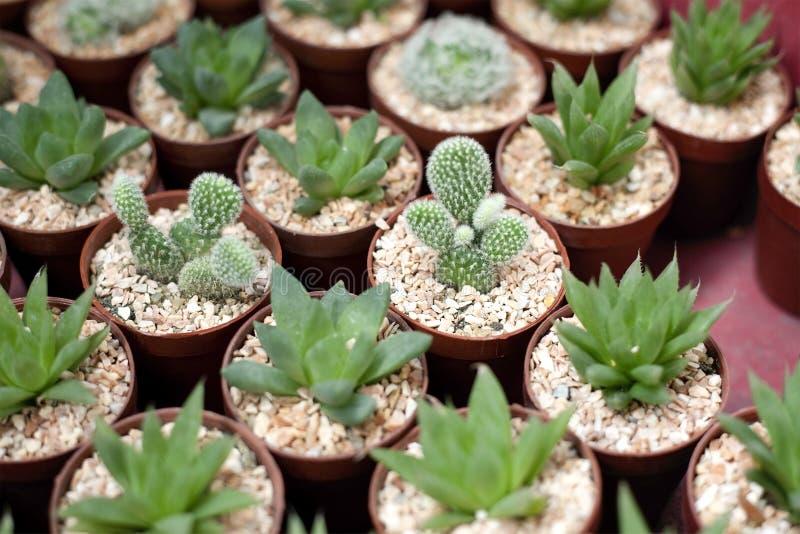 Variedad de cactus imagenes de archivo