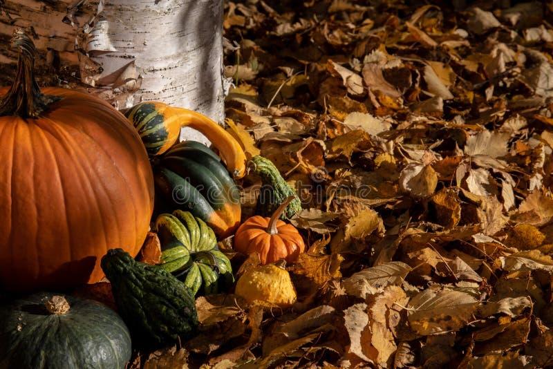 Variedad de calabaza colorida del otoño en fondo natural imagen de archivo libre de regalías