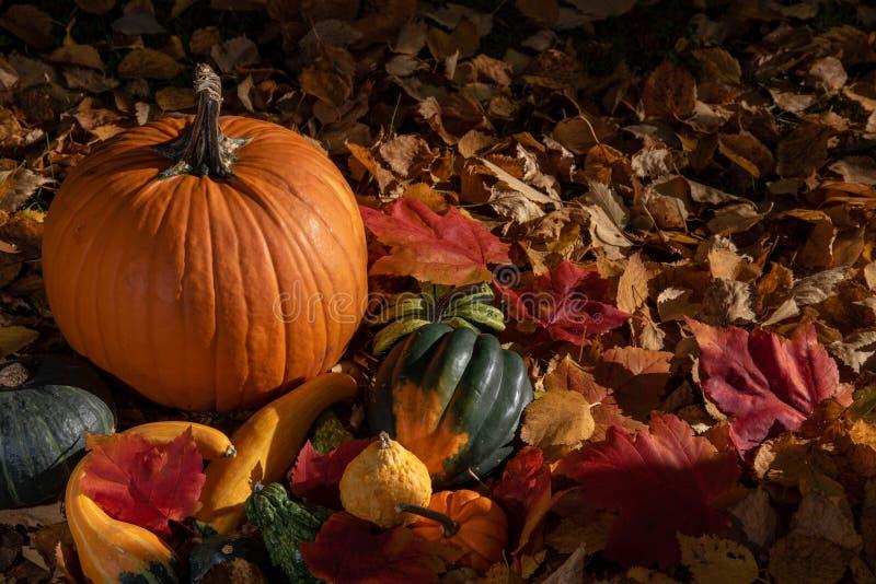 Variedad de calabaza colorida del otoño en fondo natural fotografía de archivo libre de regalías