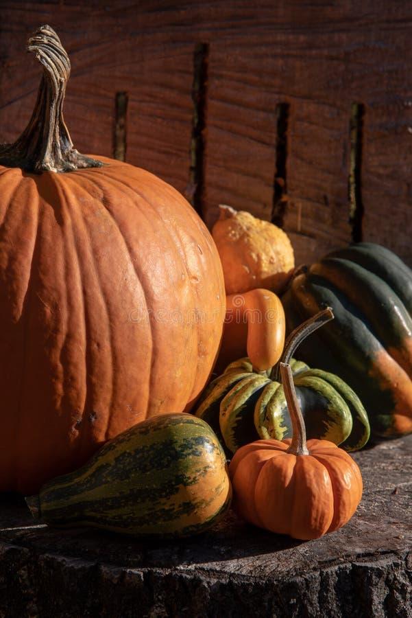 Variedad de calabaza colorida del otoño en fondo natural fotografía de archivo