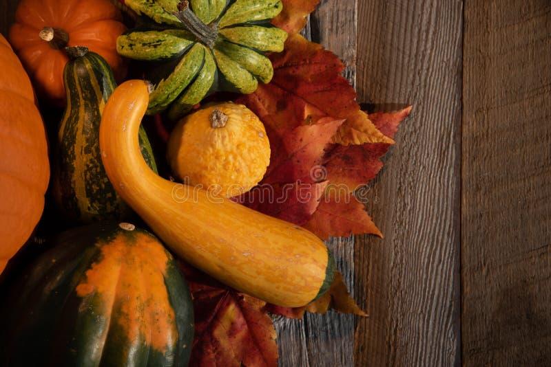 Variedad de calabaza colorida del otoño en fondo natural foto de archivo libre de regalías