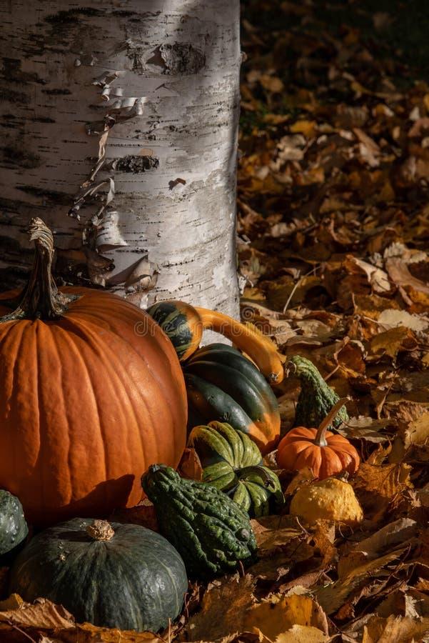 Variedad de calabaza colorida del otoño en fondo natural fotos de archivo libres de regalías