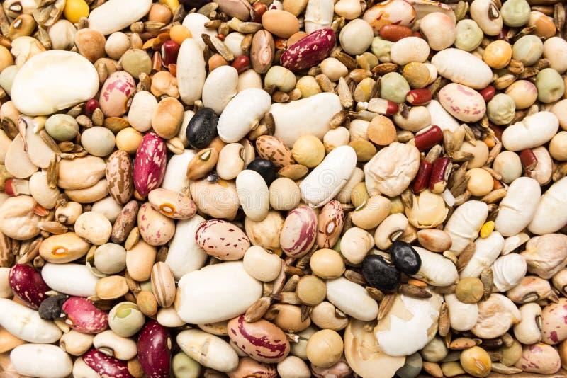 Variedad de granos putrefactos Primer de granos, uso del fondo imagen de archivo libre de regalías