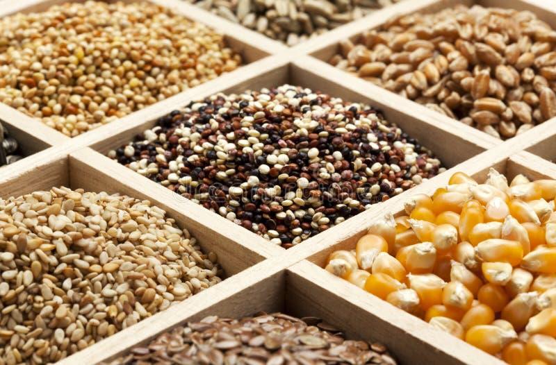 Variedad de granos y de germen en un rectángulo imágenes de archivo libres de regalías