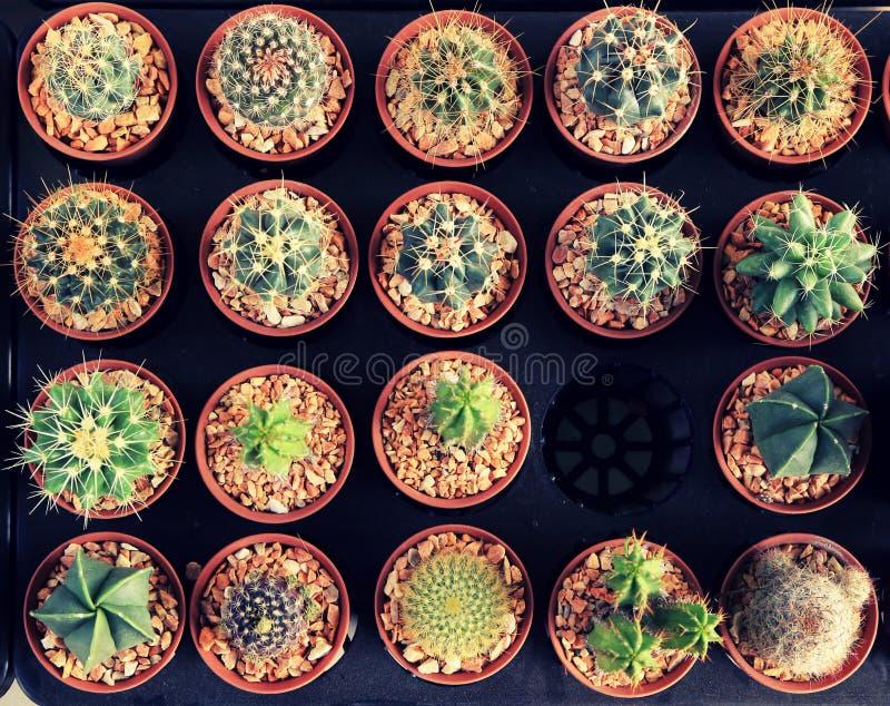 Variedad de pequeño cactus hermoso en el pote, estilo del vintage fotografía de archivo
