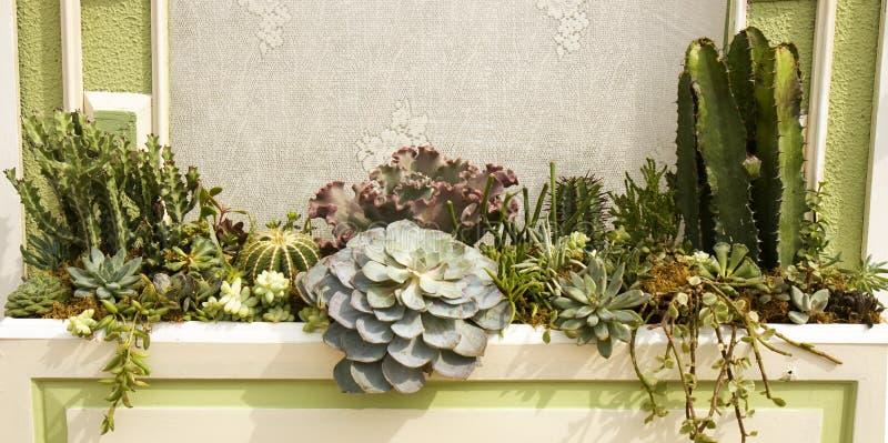 Variedad de plantas del cacto en un plantador imagen de archivo