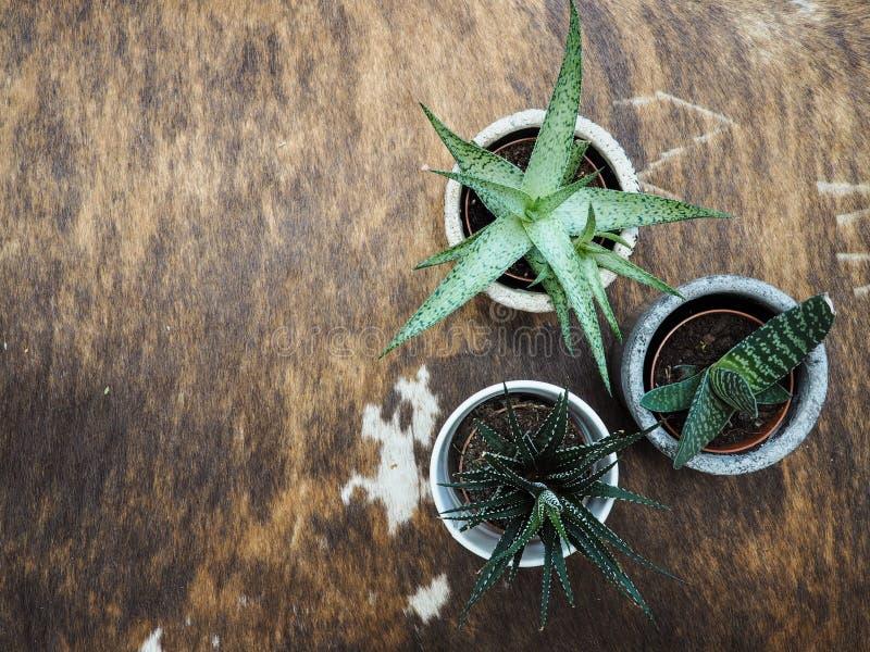 Variedad de succulents en los potes interiores en una manta del zurriago fotografía de archivo libre de regalías