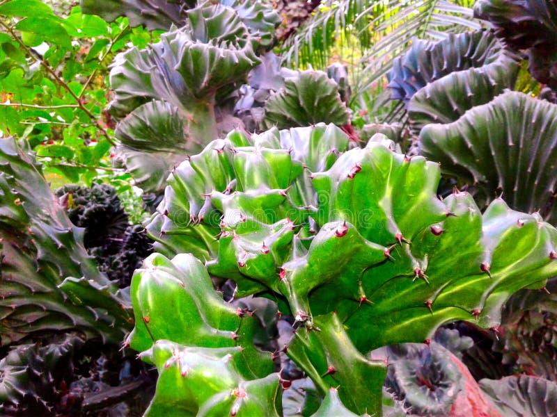 Variedad que sorprende de cactus fotos de archivo