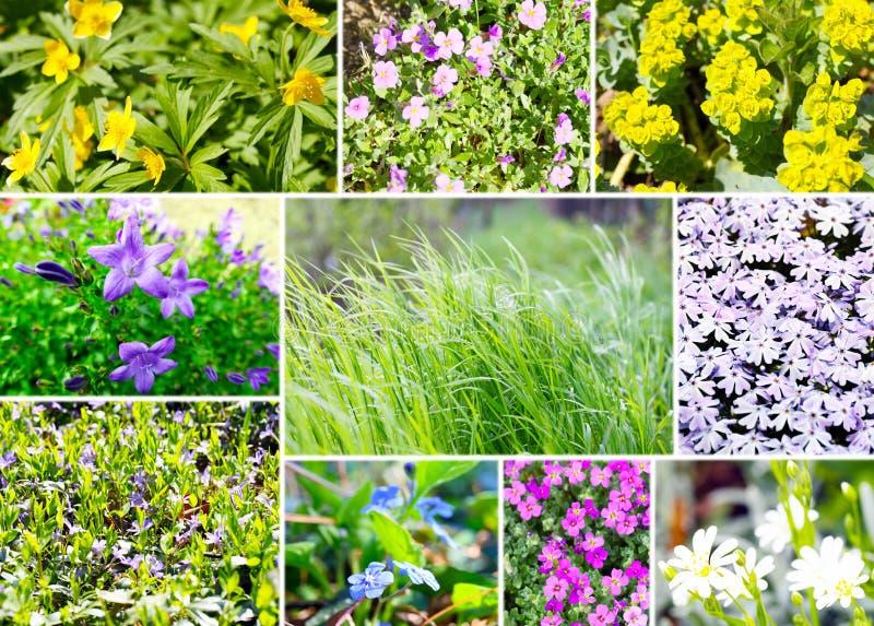 Variedade da vegetação rasteira fotografia de stock