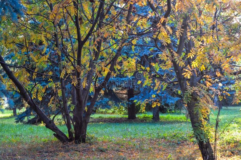 A variedade de cores da vegetação no parque fotos de stock royalty free
