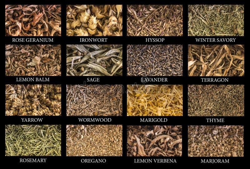 Variedade de ervas imagens de stock