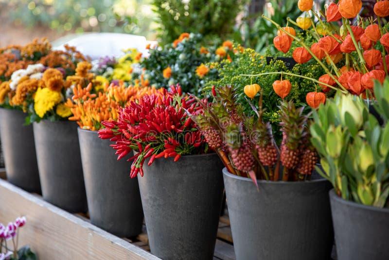 Variedade de flores sazonais de outono recentemente cortadas - crisântemos, pimentos cor de laranja e pimentões vermelhos, fitsal foto de stock