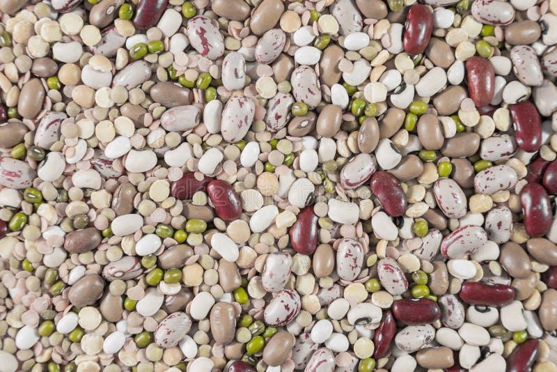 Variedade de leguminosa fotos de stock royalty free