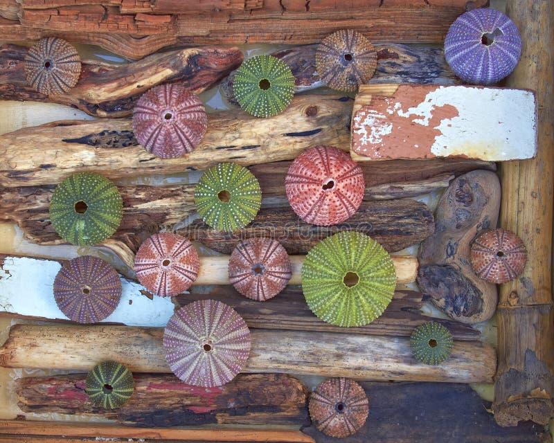 Variedade de ouriços-do-mar coloridos nos galhos e na madeira foto de stock royalty free