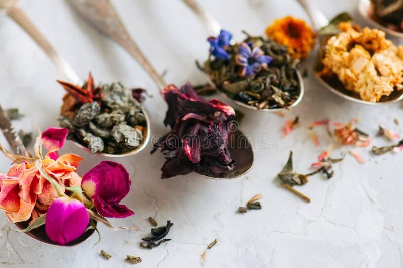 Variedade do chá verde seco erval e da flor no colheres em um w imagens de stock royalty free