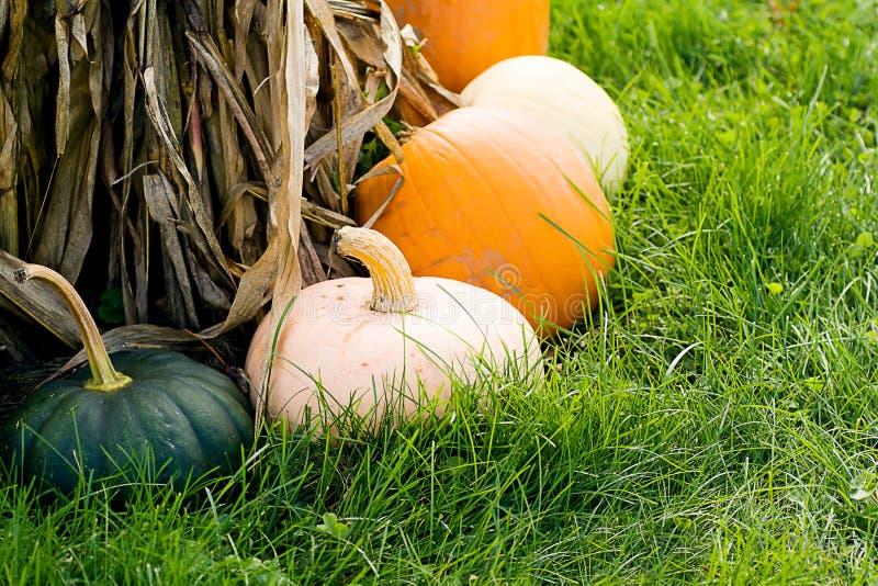Variedade do Gourd em hastes do milho fotos de stock royalty free