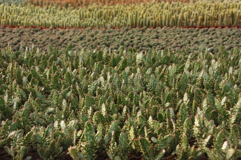 Variedades del cactus en un invernadero imagenes de archivo
