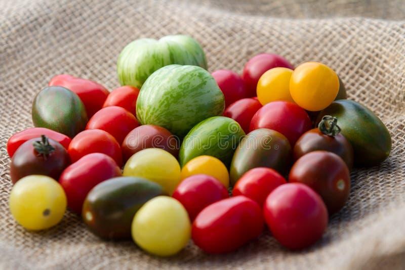 Variedades del tomate foto de archivo