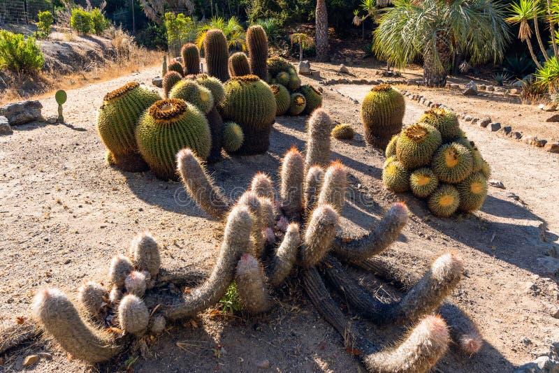 Variedades dos cactos, Catalina Island Garden, Califórnia fotografia de stock royalty free