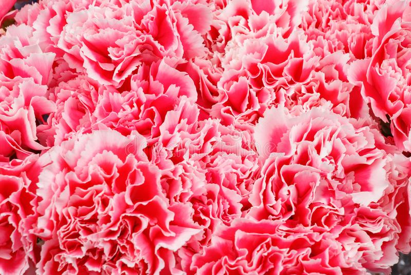 variegated цветок стоковое фото