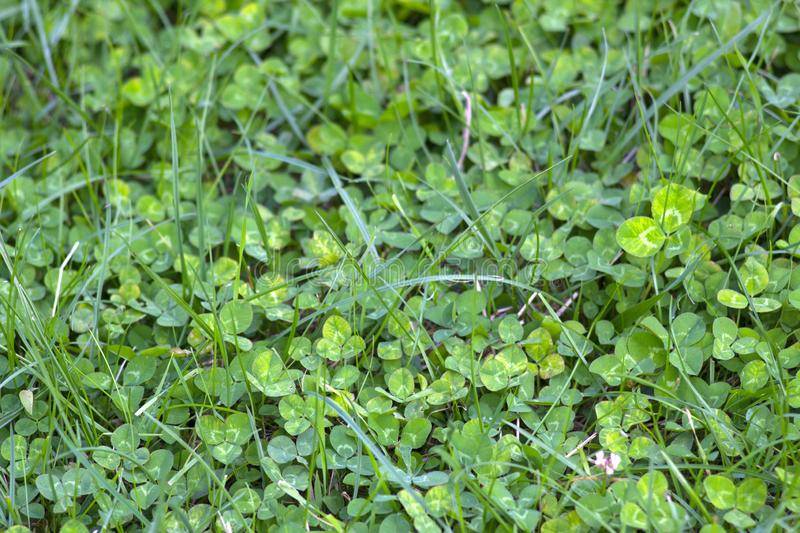 Variegated bright nature and p lants. Little sprout green. Plants in nature. Green vegetation. Variegated bright nature and plants. A small green sprout in royalty free stock image