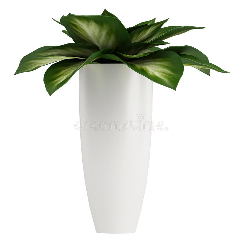 Variegated Dieffenbachia leaves stock illustration