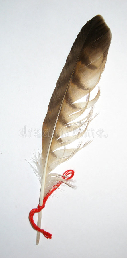 Variegated Feather Royalty Free Stock Image