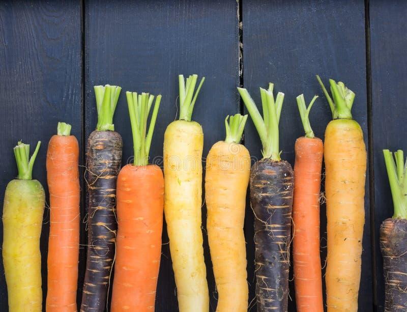 Varienties de carotte d'héritage image libre de droits