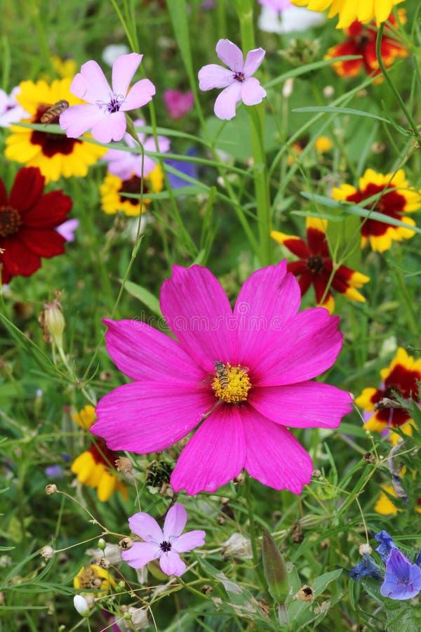 Varietà del Wildflower fotografia stock
