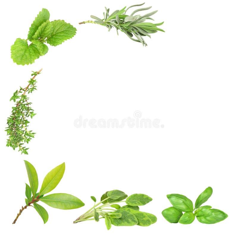 Varietà dell'erba fotografie stock