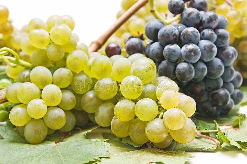Varietà dell'uva della raccolta fotografie stock libere da diritti