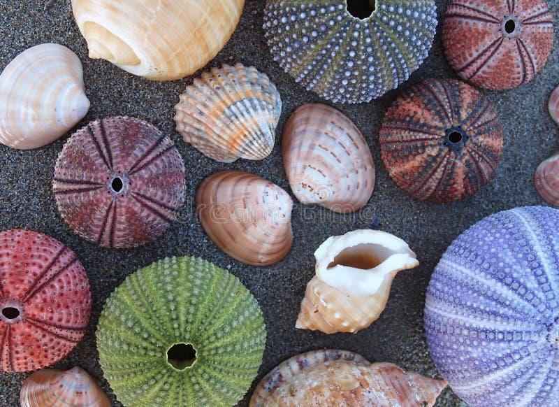 Varietà di coperture, di discoli e di molluschi del mare fotografia stock libera da diritti