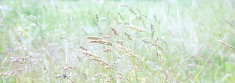 Varietà di erba nel prato Mattina soleggiata della radura di estate fotografie stock libere da diritti