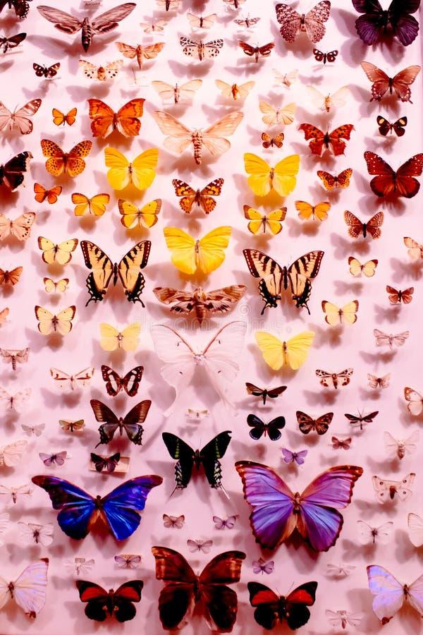 Varietà di farfalle immagine stock libera da diritti