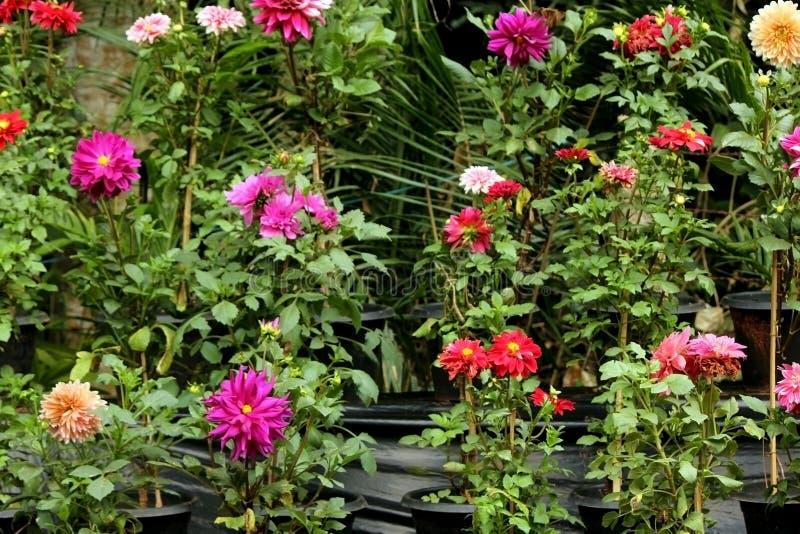 Varietà di fioritura variopinta dei fiori fotografia stock