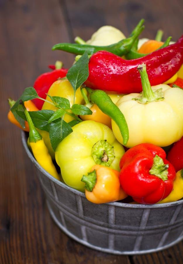Varietà di peperoni organici freschi fotografia stock