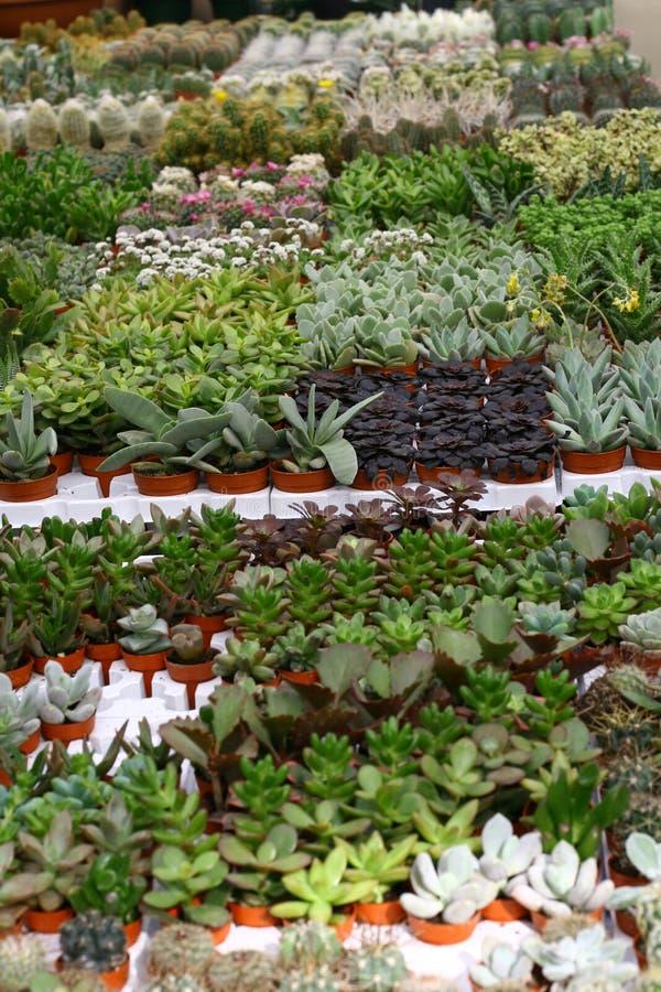 Varietà di succulents e di catcus immagine stock
