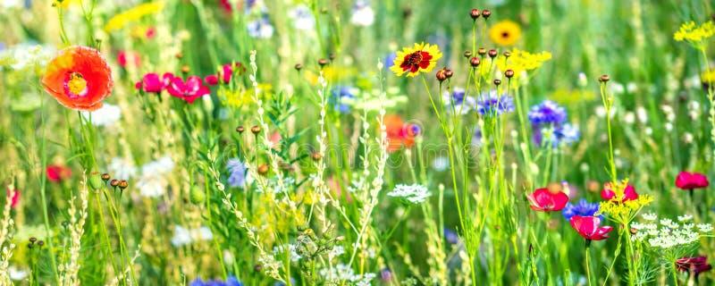 Varietà di wildflowers e di erbe indigene, prato del wildflower fotografia stock