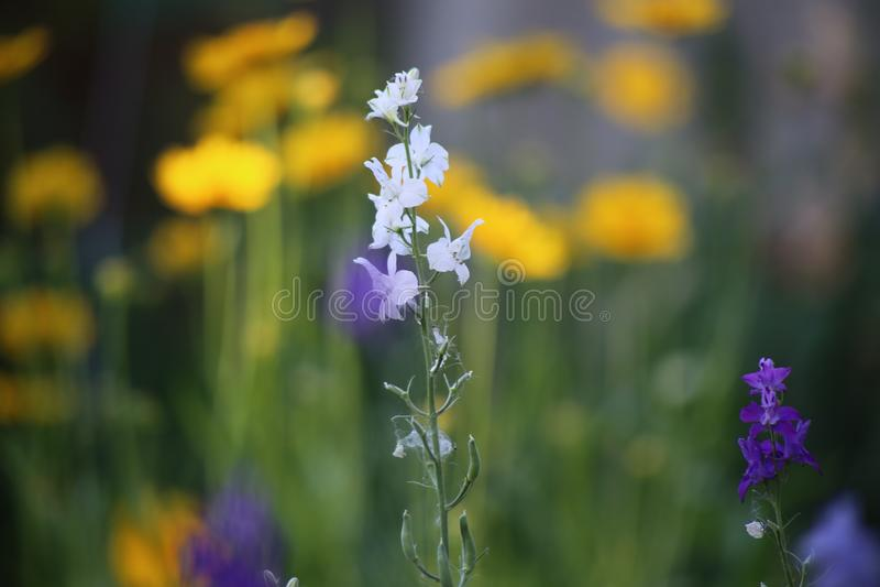 Varietà multicolore dei fiori dei wildflowers fotografia stock libera da diritti