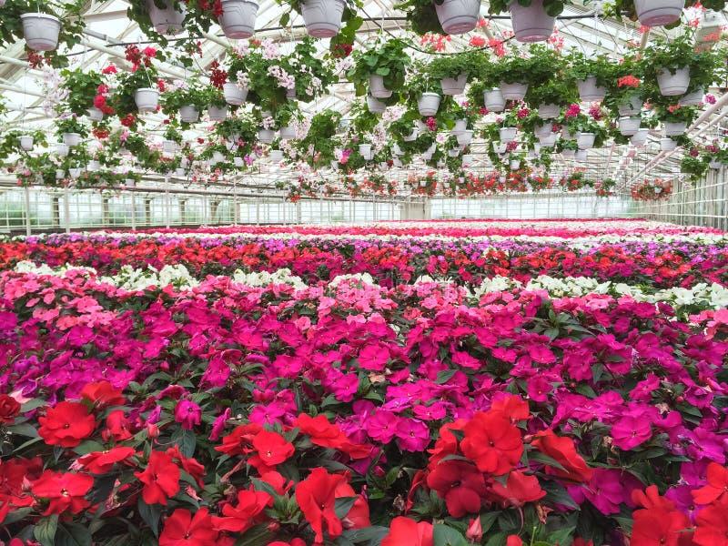Varietà variopinta di fiori in un Garden Center fotografia stock