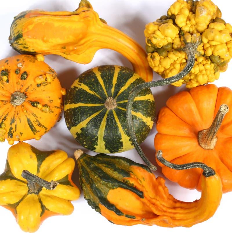 Varietà variopinte di zucche, di zucche e di zucche fotografie stock libere da diritti