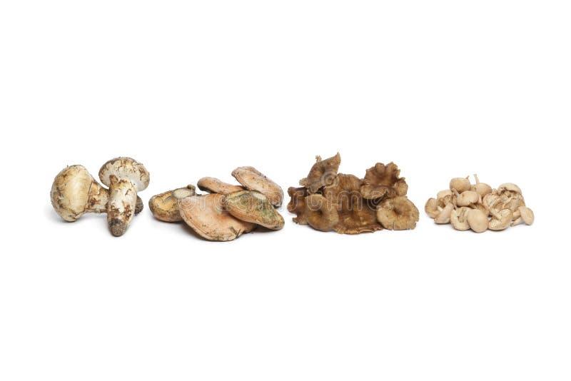 Variety of autumn mushrooms stock image