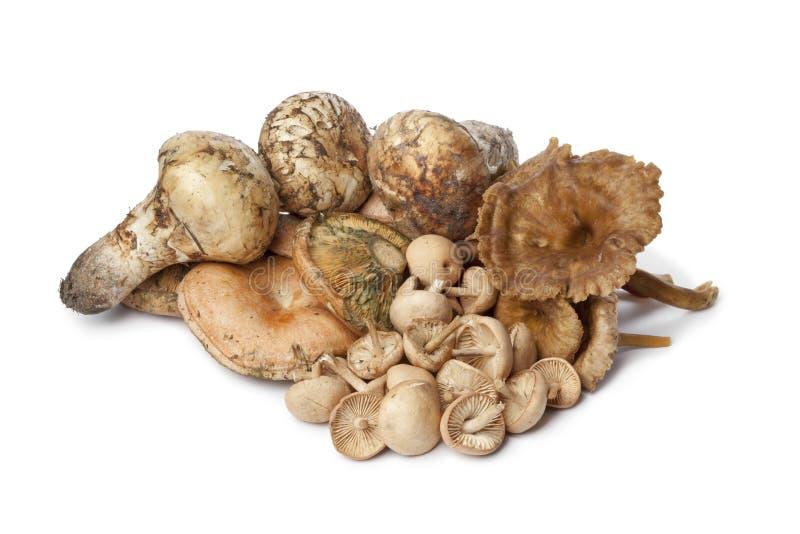 Variety of autumn mushrooms stock photos
