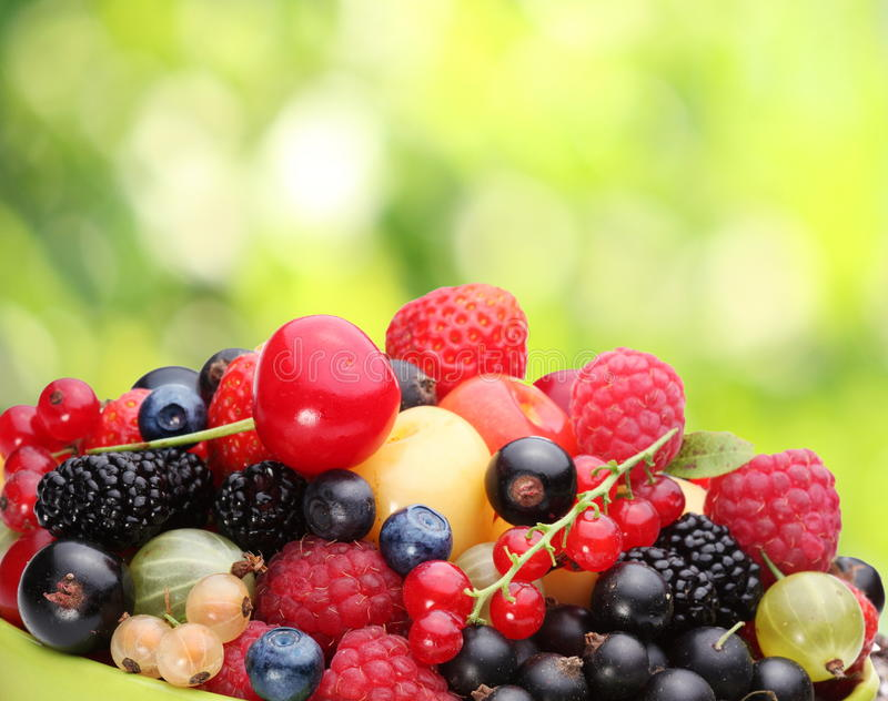 Variety of berries. On summer foliage stock photos