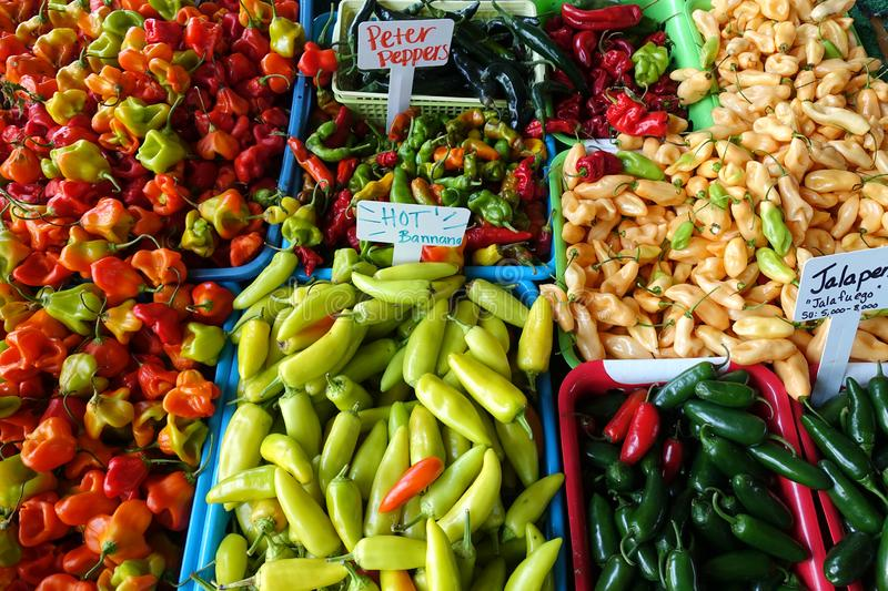 A Variety of Chili Peppers for Sale at a Farmers Market. A Variety of Chili Peppers for Sale at an Outdoor Farmers Market in Raleigh, North Carolina royalty free stock images