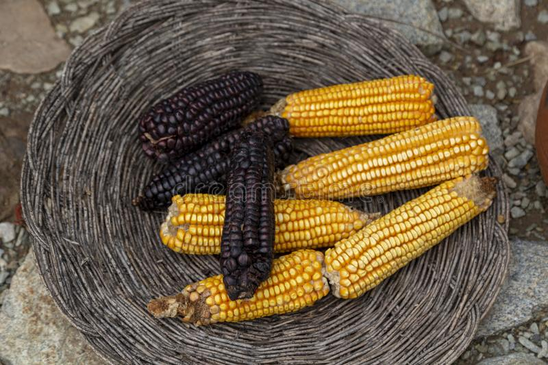 Variety of colorful corn, RED, yellow. Vitamin, orange, golden, berry, cape, peruviana, raw, heap, wood, fiber, ceramic, gooseberry, exotic, tasty, cooking stock image